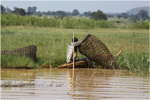 Picture showing different livelihoods in the wetland studied