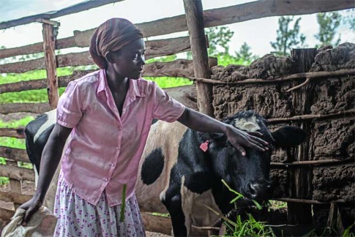 Ruth Machuma Ndunde with her cow
