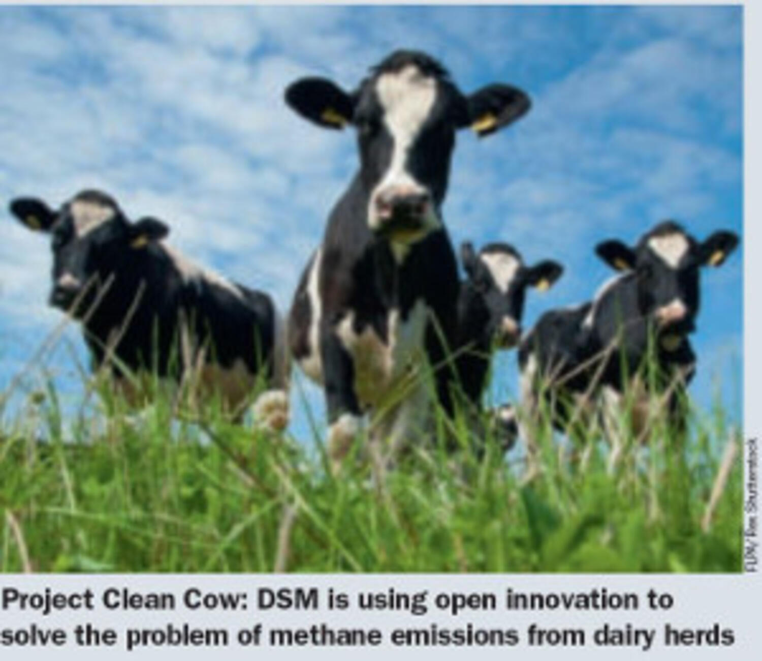 Project Clean Cow